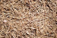 Free Dead Fir-needles Stock Images - 5534854