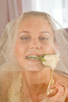 Free Wedding Portrait Stock Photos - 5535643