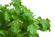 Free Parsley On White Royalty Free Stock Images - 5535859
