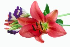Free Natural Flowers Royalty Free Stock Image - 5536096