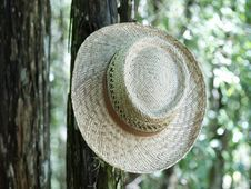 Straw Hat Hanging In A Tree Right Stock Images