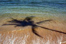 Free Palmtree Shadow 1 Royalty Free Stock Photos - 5537208