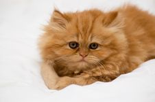 Free Kitten Stock Photography - 5537782