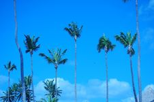 Free PALM AND SKY Royalty Free Stock Images - 5538129