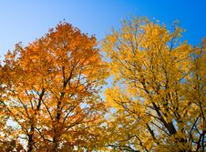Free Beautiful Autumn Foliage Stock Photo - 5538470