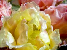 Free Yellow And Pink Cactus Stock Photography - 5538482