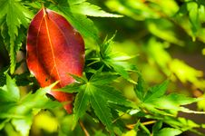 Free Leaves Stock Photo - 55370560