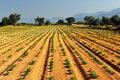 Free Vegetable Farm Stock Photo - 5540010
