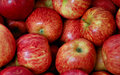 Free Colorful Red Apples Royalty Free Stock Photo - 5546265