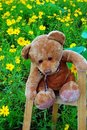 Free Teddy Bear Royalty Free Stock Photos - 5549128