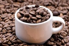 Free Coffee Royalty Free Stock Images - 5540309