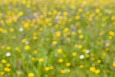 Free Meadow Background Royalty Free Stock Photography - 5540977