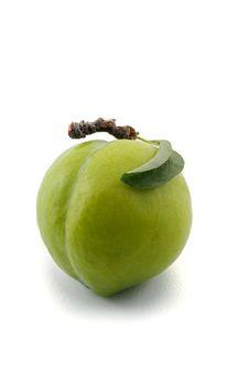Free Green Prun Royalty Free Stock Photography - 5541537