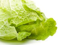 Free Fresh Celery Cabbage Royalty Free Stock Photography - 5541547