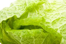 Free Fresh Celery Cabbage Royalty Free Stock Images - 5541599