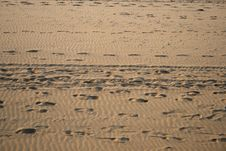 Free Footprints On The Sand Royalty Free Stock Photos - 5541798