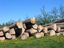 Free Pile Of Wood Logs Royalty Free Stock Photo - 5541955