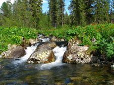 Free Stream In A Taiga Stock Images - 5542894