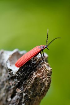 Free Red Bug Stock Images - 5544854
