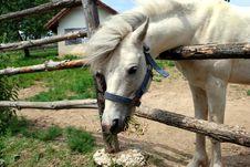White Horse Bow Royalty Free Stock Photos
