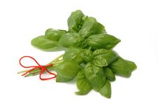 Free Herb Basil Royalty Free Stock Photo - 5545545