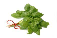 Free Herb Basil Royalty Free Stock Photo - 5545545