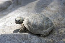 A Friendly Turtle Stock Images