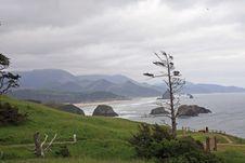 Free Lone Tree Stock Image - 5546561