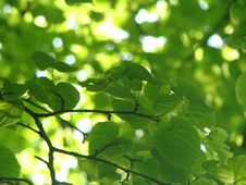 Free Leaves Stock Photos - 5546673