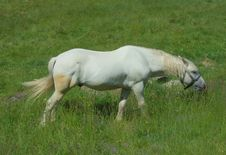 Free White Horse On A Meadow Stock Image - 5546891