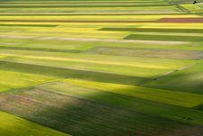 Free Coloured Fields Stock Photography - 5547392