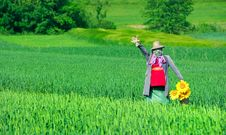 Free Scarecrow No.2 Royalty Free Stock Photography - 5547837