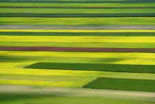Free Coloured Fields Royalty Free Stock Photos - 5547838