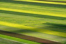 Free Coloured Fields Stock Images - 5547874