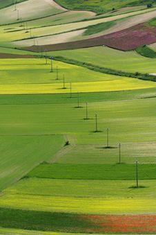 Free Coloured Fields Stock Photos - 5547903