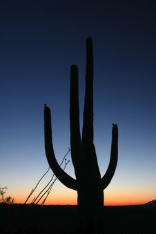 Free Silhouette Of Cactus Royalty Free Stock Images - 5548219