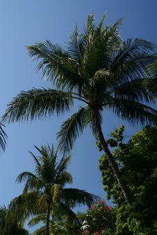 Free Palm Tree Stock Photos - 5548233