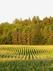 Free Field 4 Stock Photography - 5548332