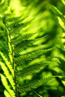 Free Detail Of A Fern Royalty Free Stock Image - 5548436