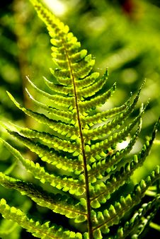 Free Detail Of A Fern Stock Photos - 5548453