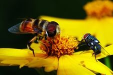 Free The Fly And Flower Stock Images - 5548754
