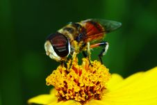 Free The Fly And Flower Royalty Free Stock Photos - 5548848
