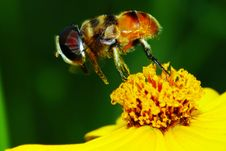 Free The Fly And Flower Royalty Free Stock Photography - 5549147
