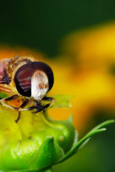 Free The Fly And Flower Stock Photography - 5549332