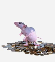 Mouse On Pile Of Money Royalty Free Stock Image