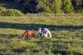 Free Horses Eating - Horizontal Stock Images - 5559954