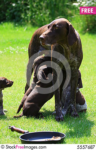 Free Puppy Royalty Free Stock Photography - 5557687