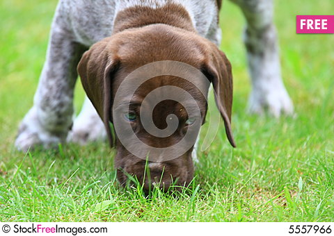 Free Puppy Royalty Free Stock Image - 5557966