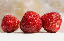 Free Strawberries Stock Photo - 5550280