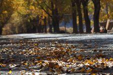 Free Autumn Leaves Royalty Free Stock Photo - 5550665
